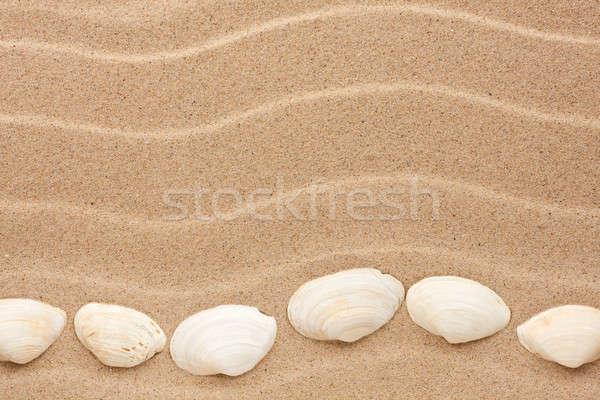 Fehér kagyló hazugság homok konzerv használt Stock fotó © alekleks