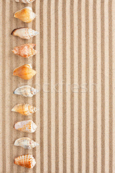 Mar conchas mentir areia lata usado Foto stock © alekleks