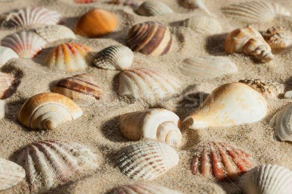 Сток-фото: ракушки · из · песок · солнечный · свет · пляж