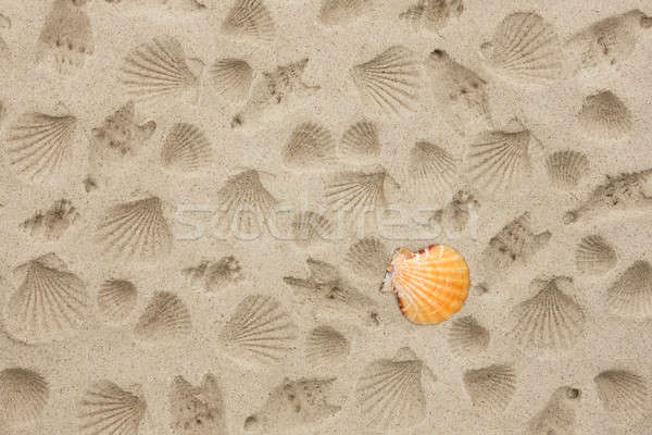 Stock photo: The prints of seashells on the sand
