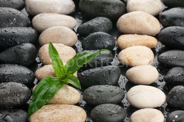 Zen taşlar yaprak su damlası su arka plan Stok fotoğraf © alekleks