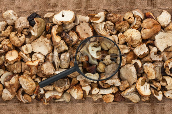Magnifying glass lies on dried mushroom  and sacking Stock photo © alekleks