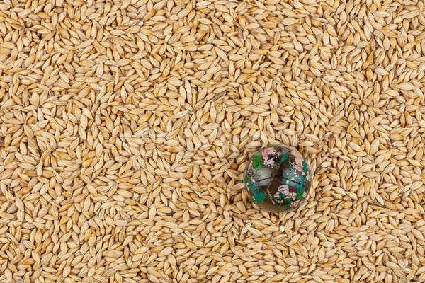 Vidrio mundo cebada semillas grano tierra Foto stock © alekleks