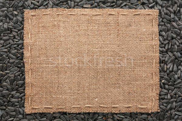 кадр брезент линия Ложь подсолнечника семян Сток-фото © alekleks