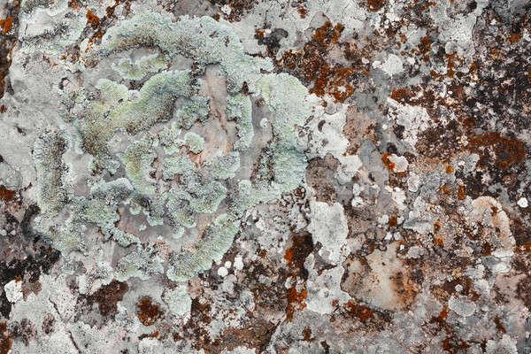 Mech kamień puszka używany tekstury ściany Zdjęcia stock © alekleks