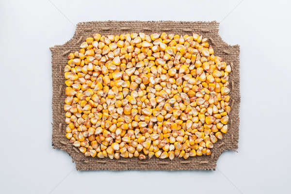 кадр брезент кукурузы лежать белый Сток-фото © alekleks