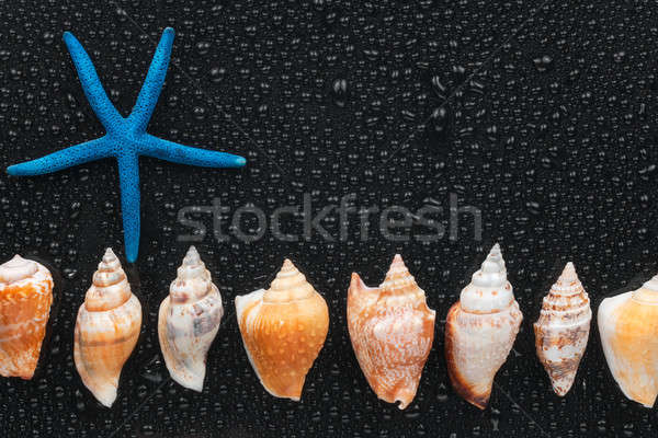 Estrellas de mar mentir línea lugar agua Foto stock © alekleks