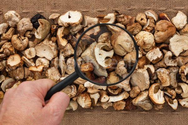 Man's hand with magnifying glass over mushroom  Stock photo © alekleks