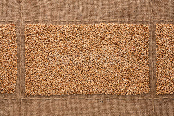 Búzaszemek hely szöveg rajz háttér kenyér Stock fotó © alekleks