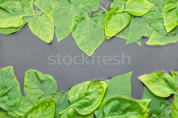 Of lilac leaves in water Stock photo © alekleks