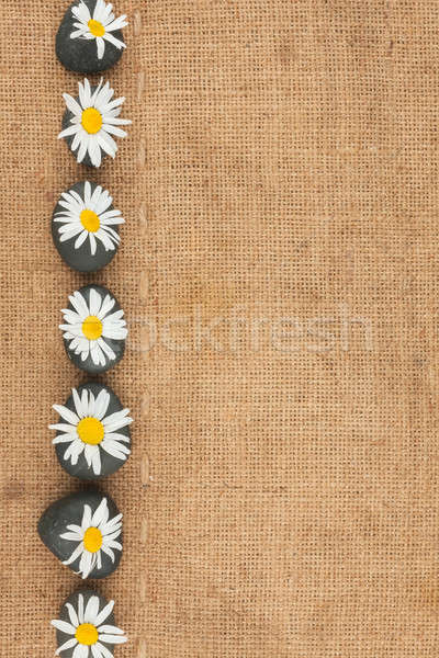 camomile and black stone are on sackcloth Stock photo © alekleks