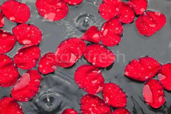 Piros rózsa szirmok víz eső konzerv virág Stock fotó © alekleks
