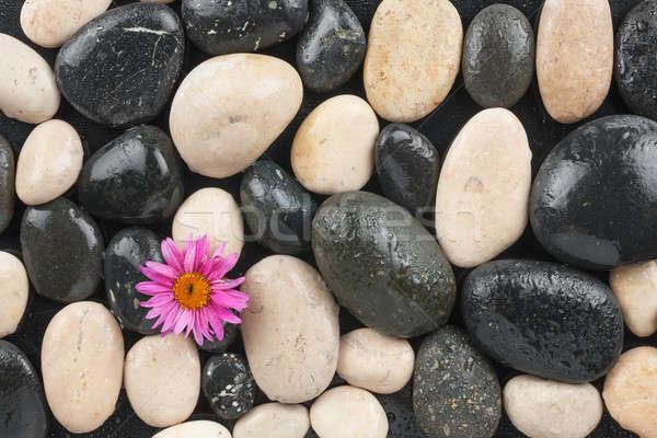 Zen kövek virág vízcseppek víz használt Stock fotó © alekleks