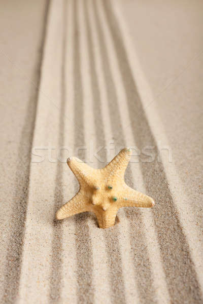 Star sticking out in the sand Stock photo © alekleks