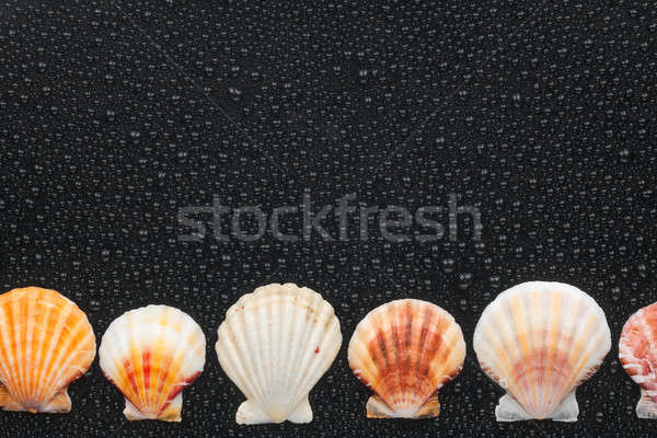 seashells  lie on a par with  Stock photo © alekleks