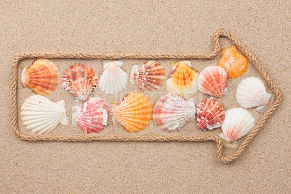Pointer made of rope with sea shells Stock photo © alekleks