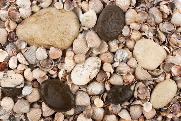 Conchas pedras molhado praia natureza fundo Foto stock © alekleks