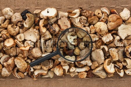 Dried  boletus  lying on sackcloth between the lines Stock photo © alekleks