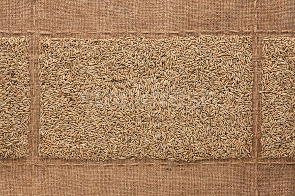 Rye grains on sackcloth, with place for your text Stock photo © alekleks