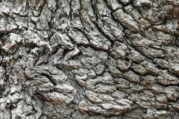 Texture écorce vieux arbre peuvent utilisé Photo stock © alekleks