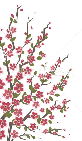 Sakura branch. Floral background. Stock photo © Aleksangel