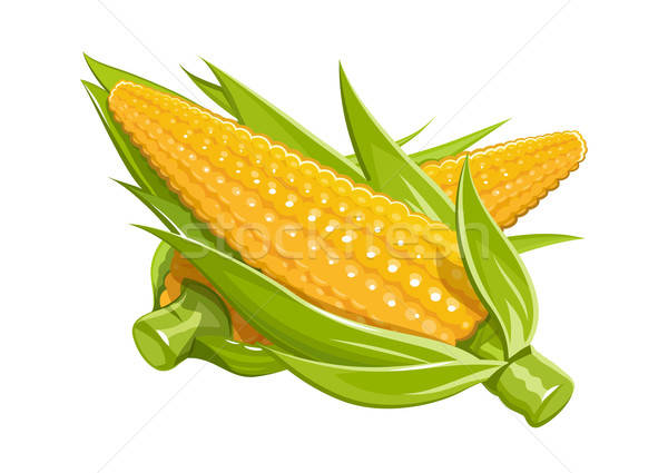Corn vector illustration eps10 isolated white background Stock photo © Aleksangel