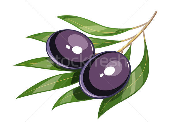 Pair of black olive vector illustration eps10 Stock photo © Aleksangel