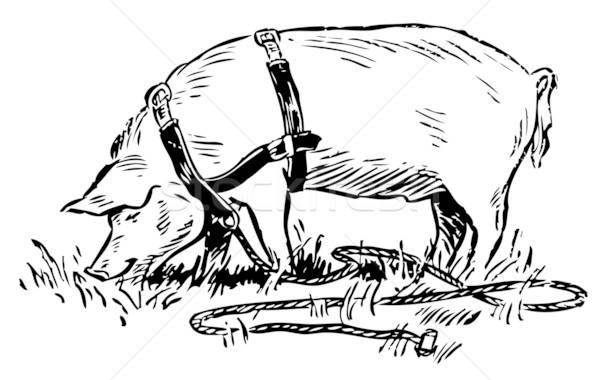 Domuz çim doğa dizayn imzalamak takım Stok fotoğraf © alekup