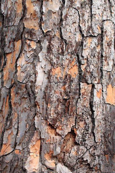 çam ağacı havlama ayrıntılı görmek ahşap orman Stok fotoğraf © alessandro0770