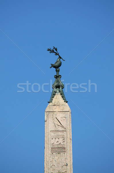 The pigeon of Navona Square Stock photo © alessandro0770
