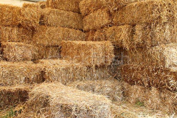 Ahır iç yan çim Bina çiftlik Stok fotoğraf © alessandro0770