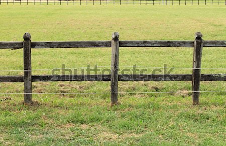 Horses wooden fence Stock photo © alessandro0770