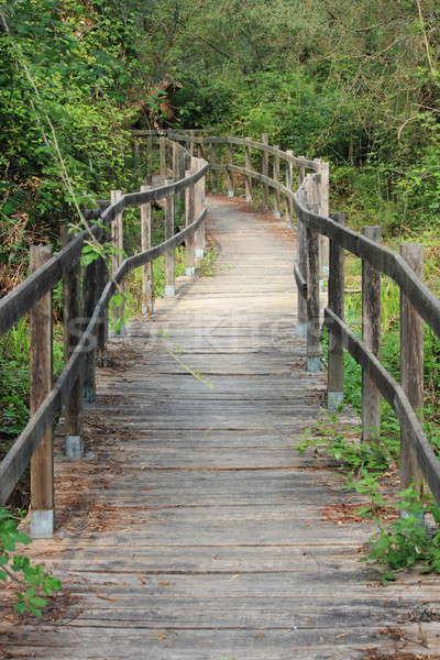 Floresta trilha verde ponte viajar caminhadas Foto stock © alessandro0770