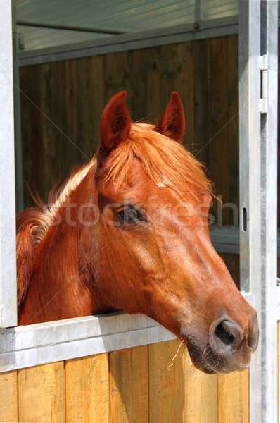 Pony in stable Stock photo © alessandro0770