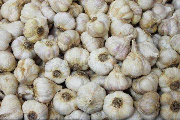 Garlic Stock photo © alessandro0770