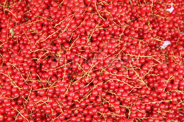 Piros ribiszke frissen bogyók természet háttér Stock fotó © alessandro0770