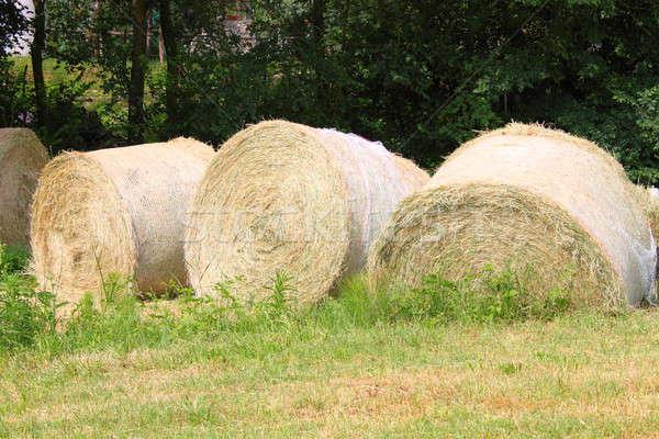 Feno grama verde grama árvores campo fazenda Foto stock © alessandro0770