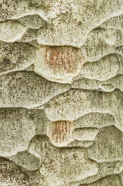 Arbre écorce détail feuillus usine orme Photo stock © AlessandroZocc