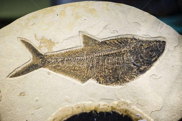 Vis fossiel uitgestorven soorten print zand Stockfoto © AlessandroZocc