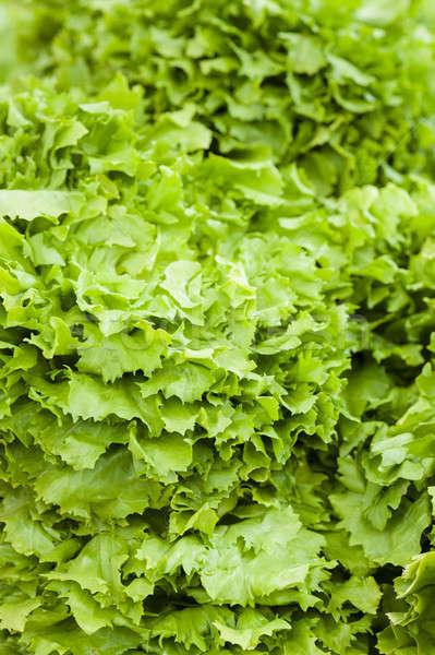 Nem leírás étel nyár zöld saláta Stock fotó © AlessandroZocc