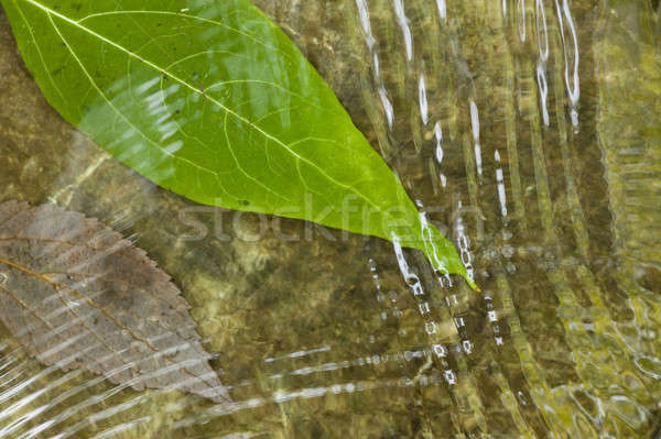 Leaf on flowing water Stock photo © AlessandroZocc