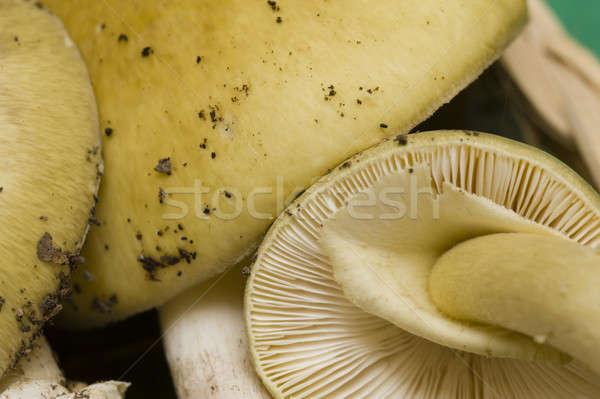 Champignons giftig hout bos patroon vallen Stockfoto © AlessandroZocc
