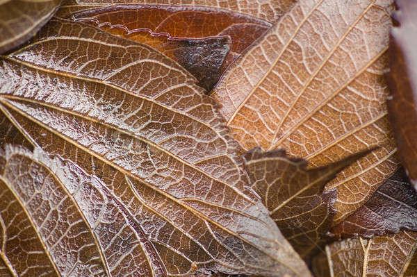 Bladeren grond blad achtergrond Rood Stockfoto © AlessandroZocc