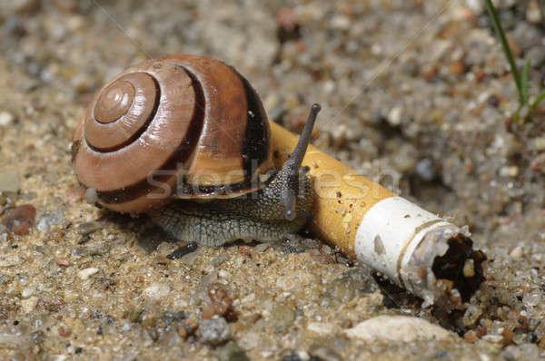 Ground snail on cigarette Stock photo © AlessandroZocc