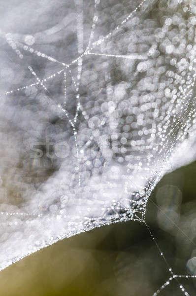 Harmat cseppek pókháló hát fény textúra Stock fotó © AlessandroZocc