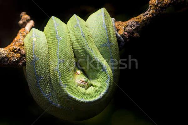 Tropicales vert serpent branche oeil Photo stock © AlessandroZocc