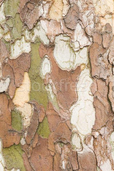 Plane tree bark close up Stock photo © AlessandroZocc