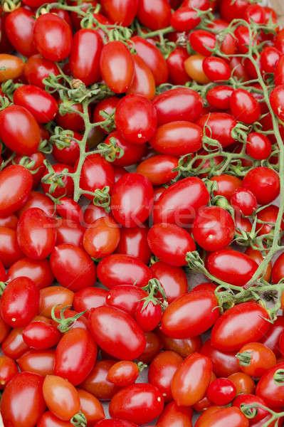 Czerwony pomidory Widok roślin Zdjęcia stock © AlessandroZocc