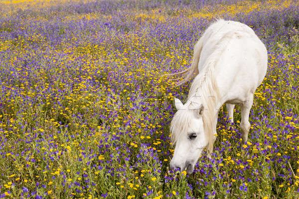Veld bloemen bloem natuur paard Stockfoto © AlessandroZocc