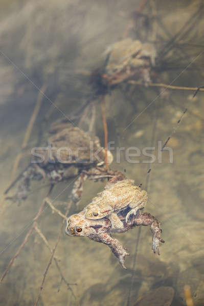 Víz közelkép tojás női állat Európa Stock fotó © AlessandroZocc